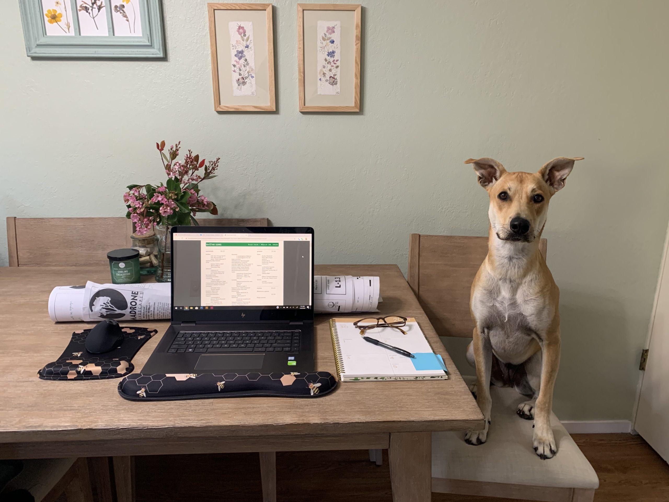 Megan's Workspace feat. Lily the Dog
