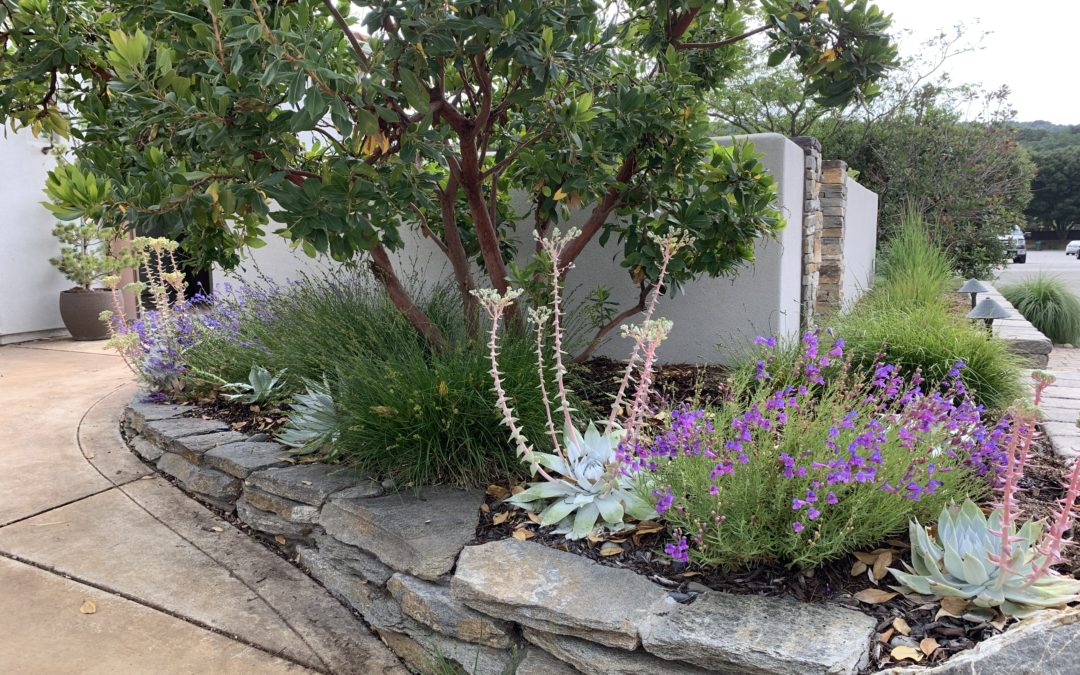 Brilliant Corners: Five Favorite California Native Accent Plants