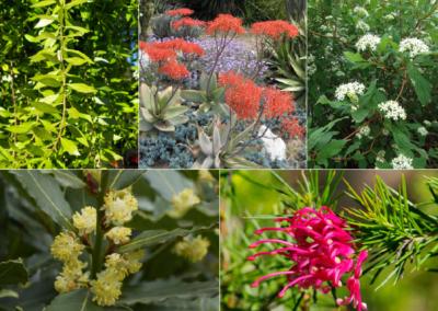 Five Favorite Mediterranean Plants for Springtime