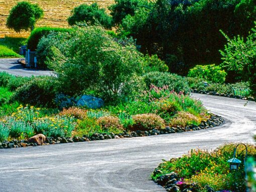 Eight Tips for Sustainable Landscapes on the Central Coast