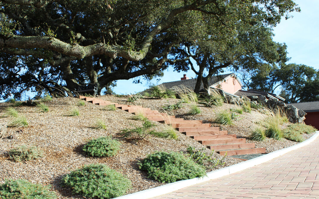 Atascadero Oak Woodland