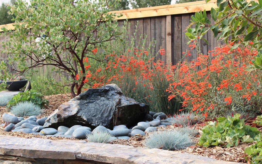California Native Oasis